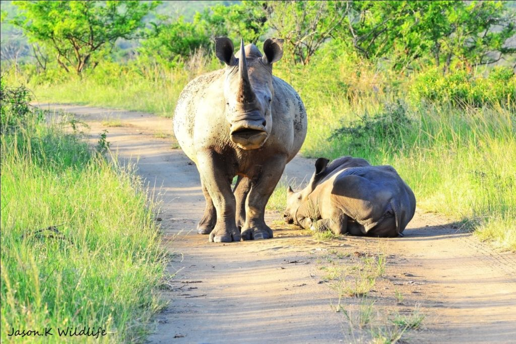 Photograph by Head Ranger Jason Kipling, Rhino Ridge Safari Lodge
