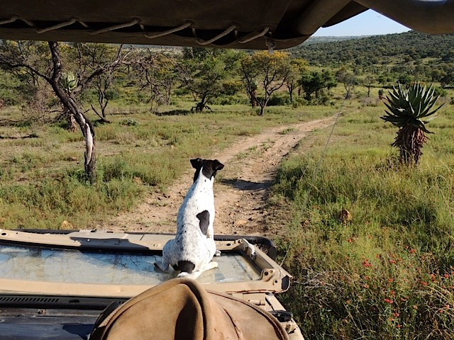 Mkuze on Safari 1