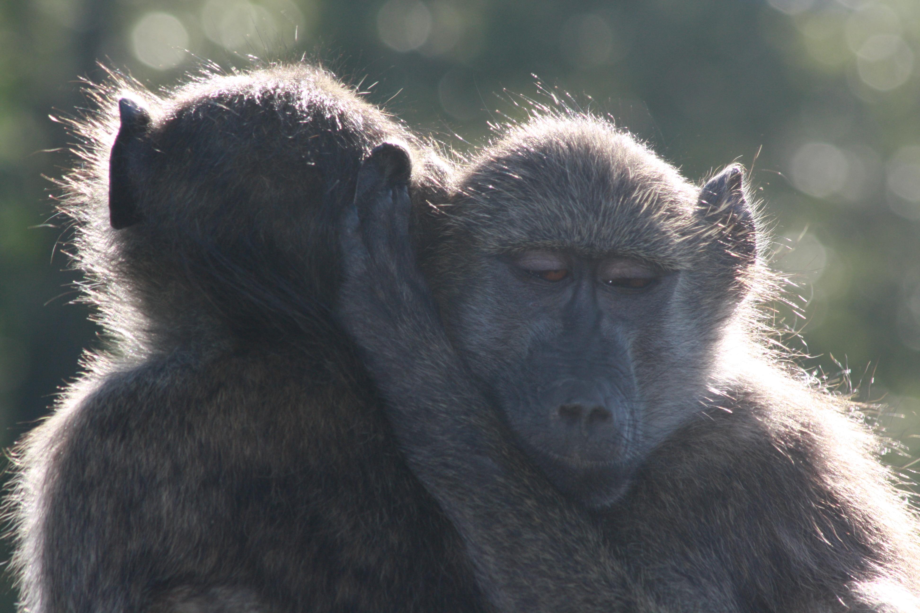 Kruger 2010 126