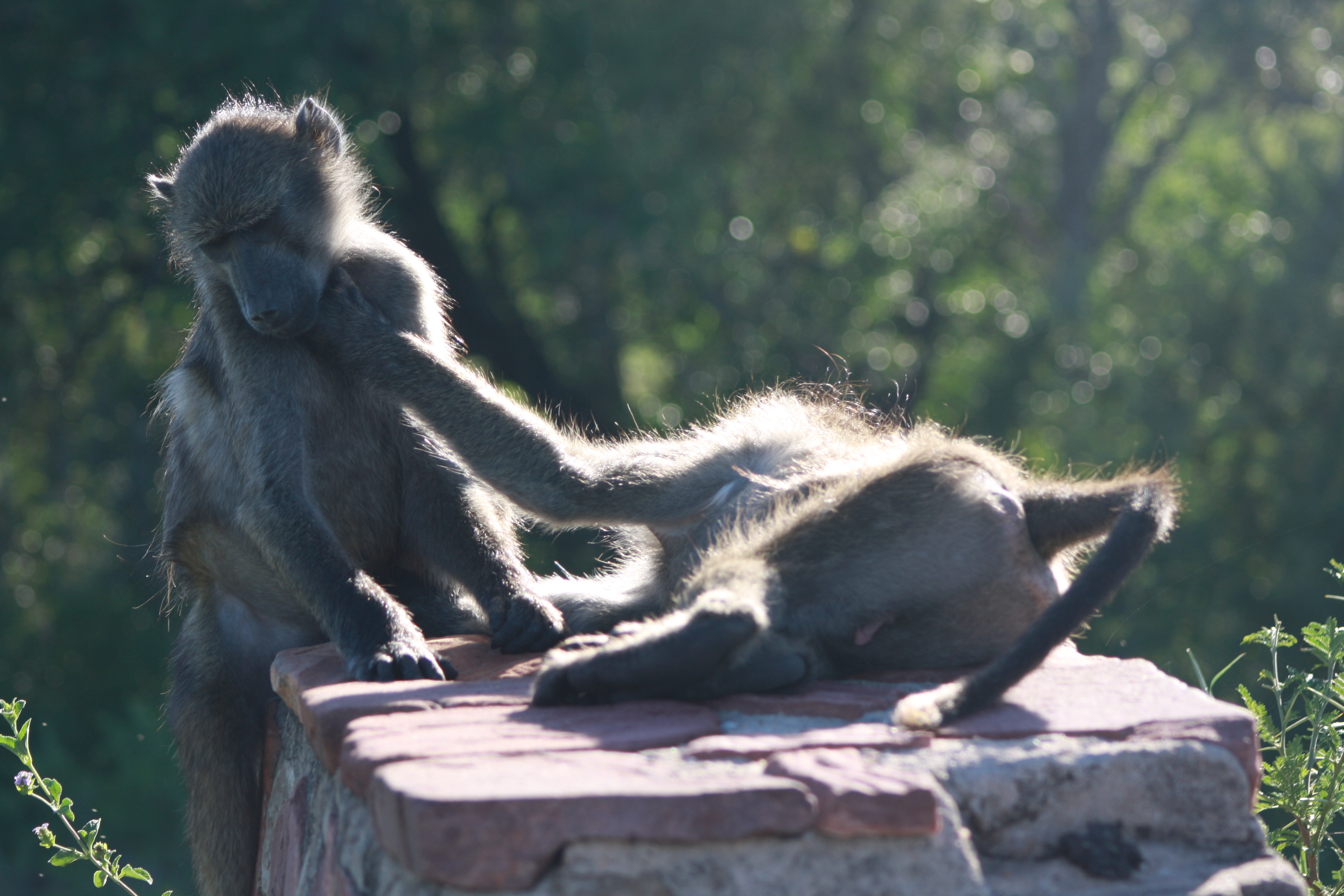 Kruger 2010 127