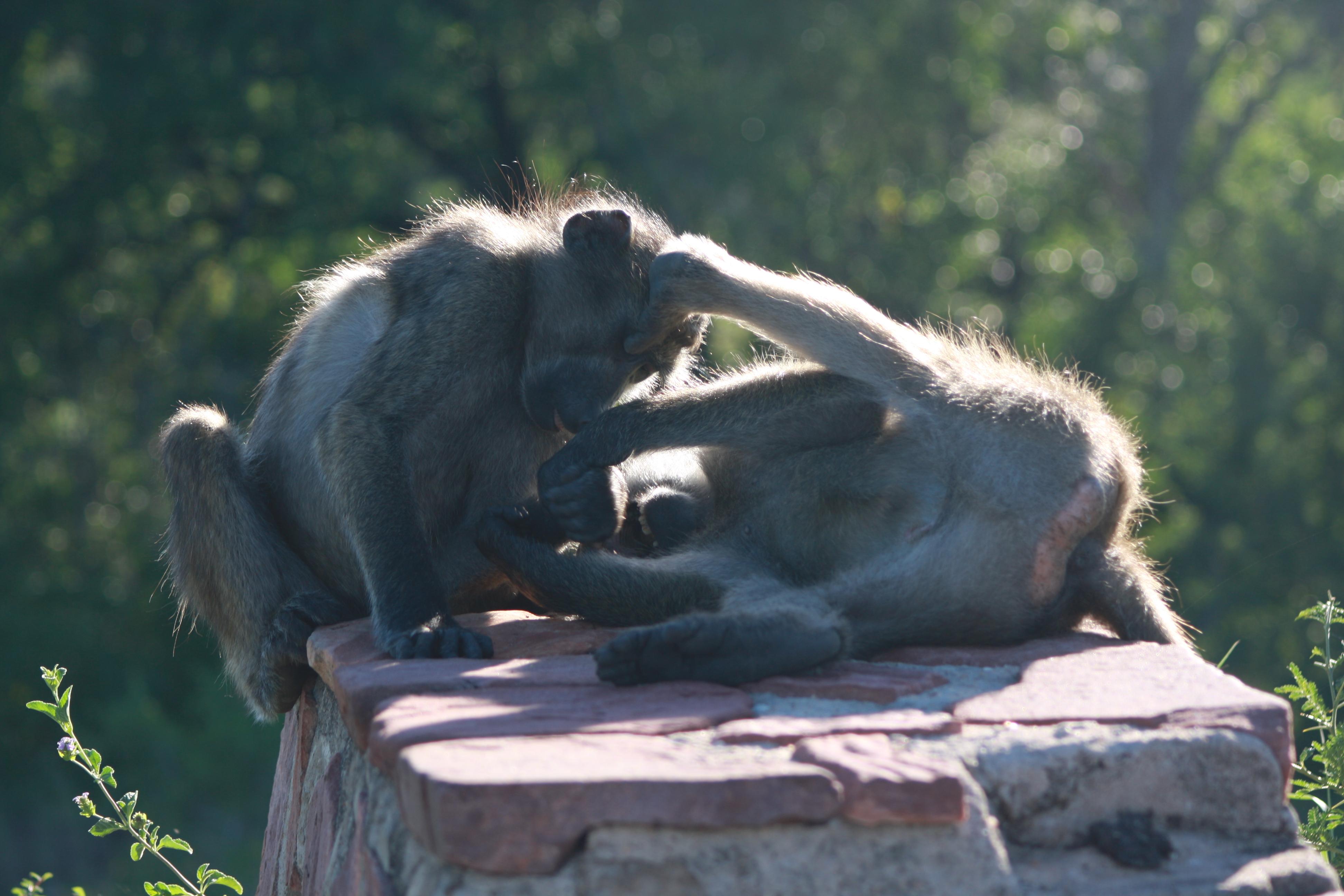 Kruger 2010 128
