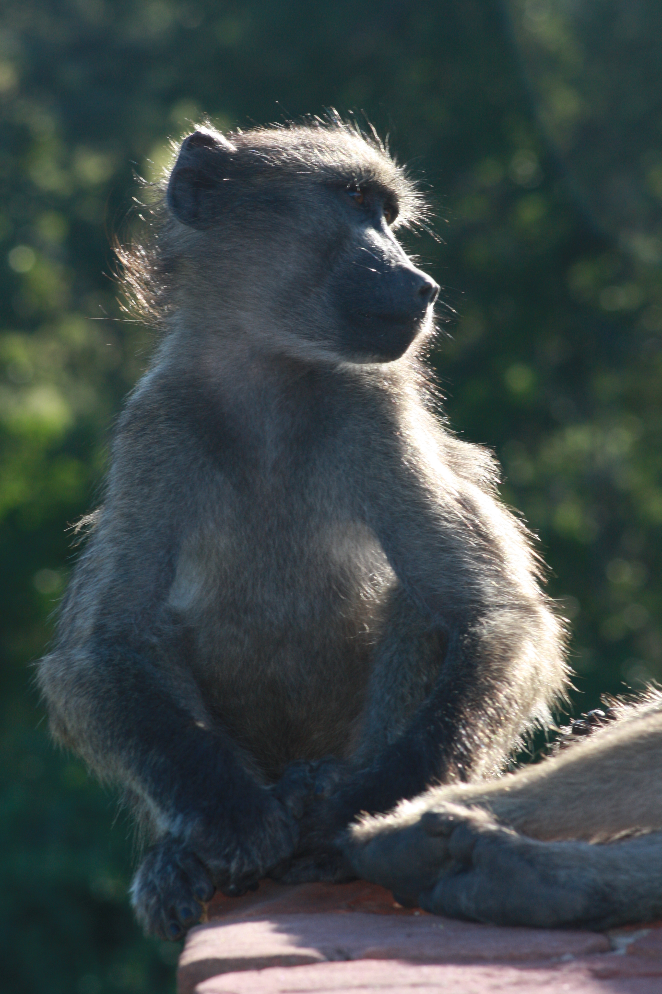 Kruger 2010 129
