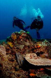 Luxury Dive Resort - Thonga Reefs With Leopard Eel