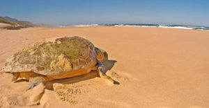 Turtle by Donna Scherer Fisheyeafrica