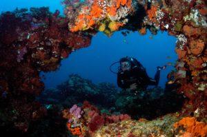 Luxury Dive Resort - Diving by Donna Scherer Fisheyeafrica