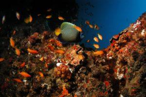 Reef by Donna Scherer Fisheyeafrica