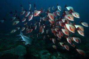 Diving by Donna Scherer Fisheyeafrica