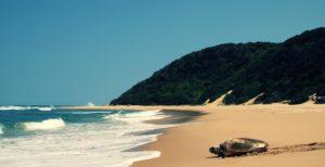 Turtle On Thonga Beach