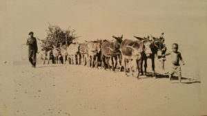 This is one of the original photographs that Herbert took when he first visited South Africa