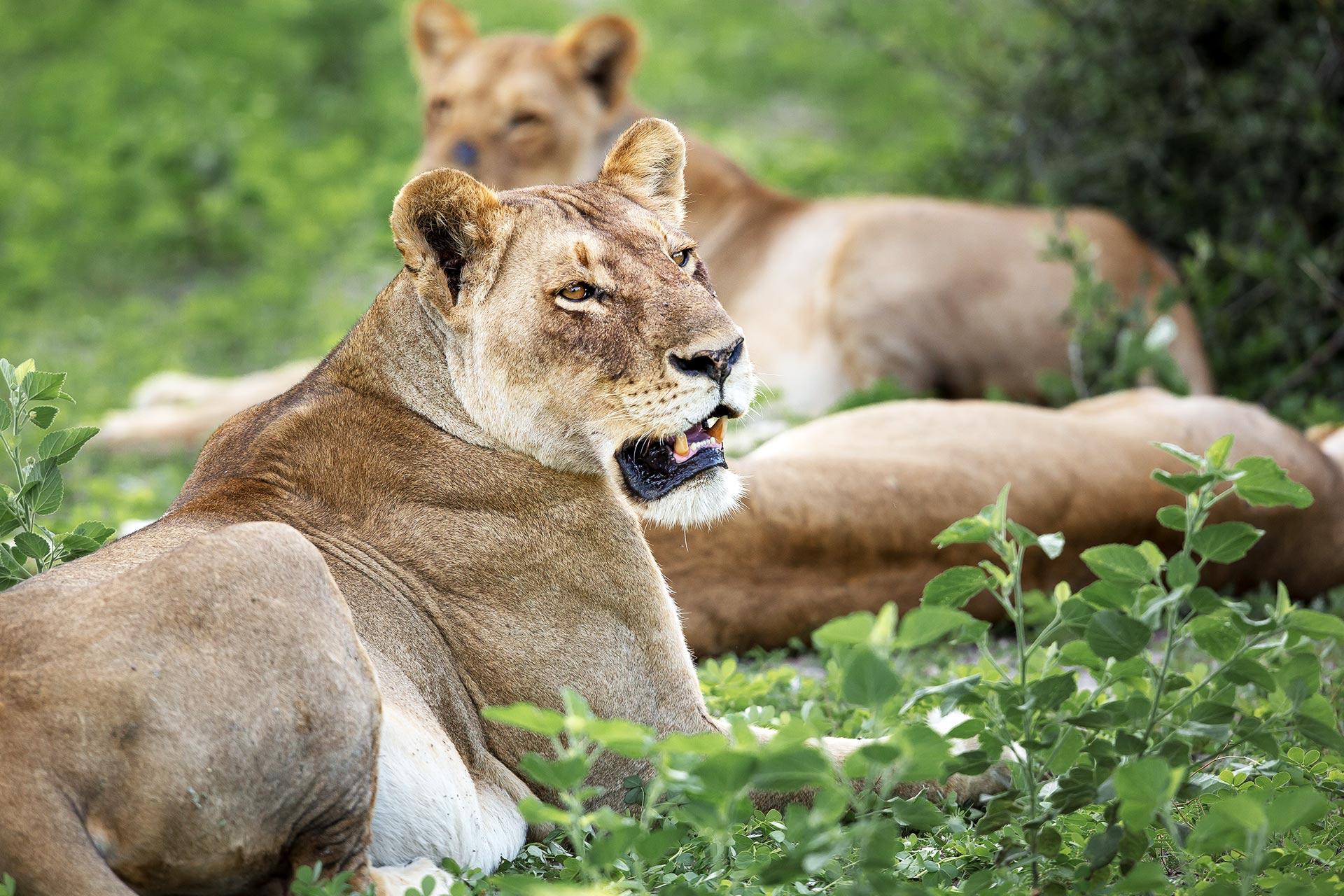 Rhino Ridge Safari Lodge