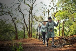 Bush Trails at Rhino Ridge Safari Lodge
