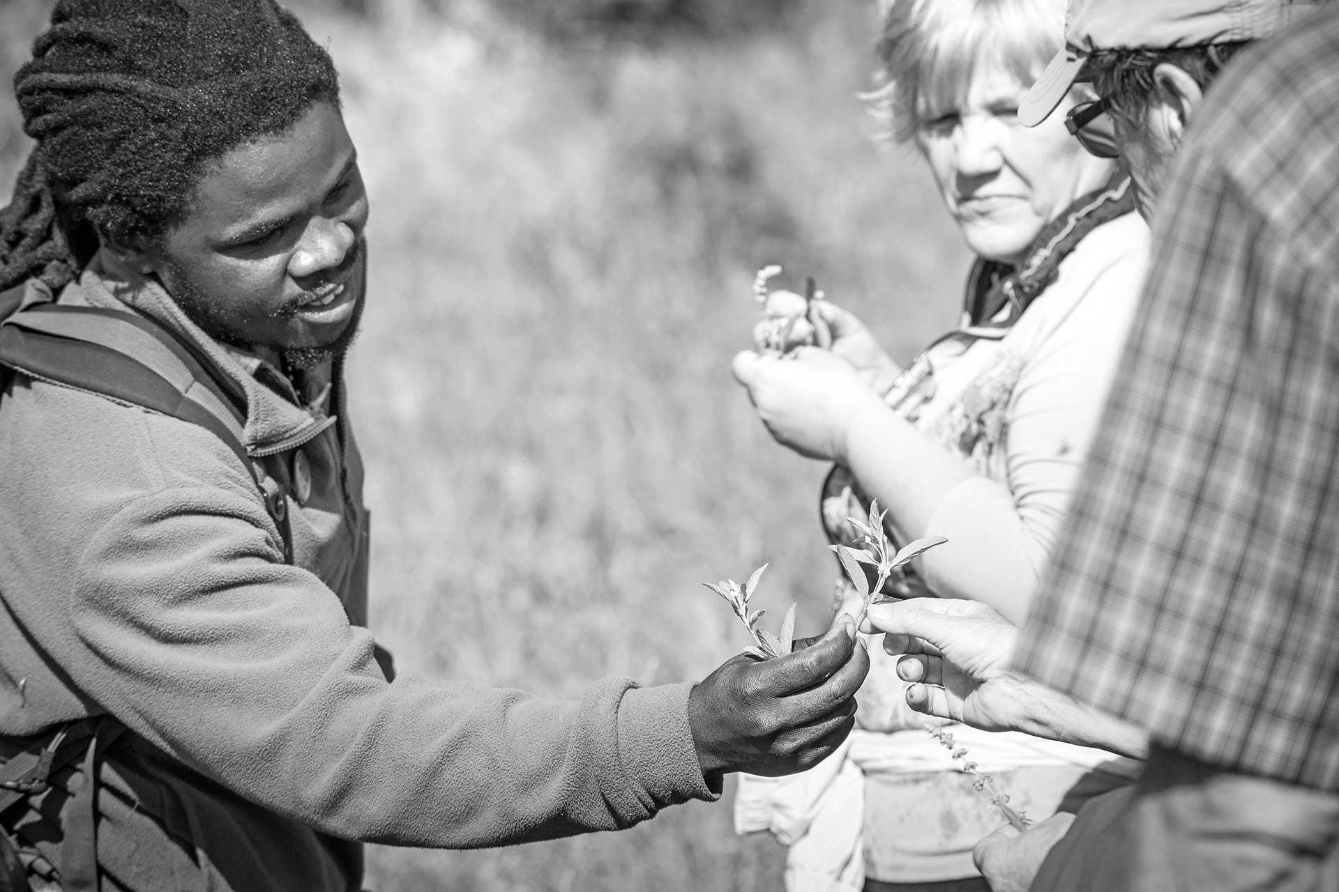 Birds of Rhino Ridge Safari Lodge