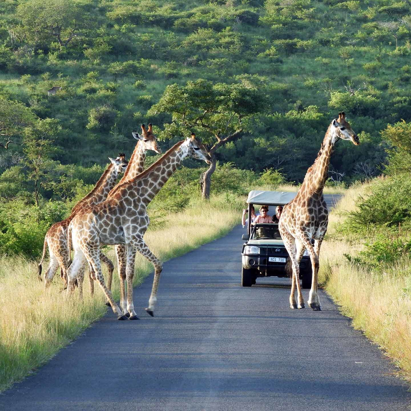 game_drives